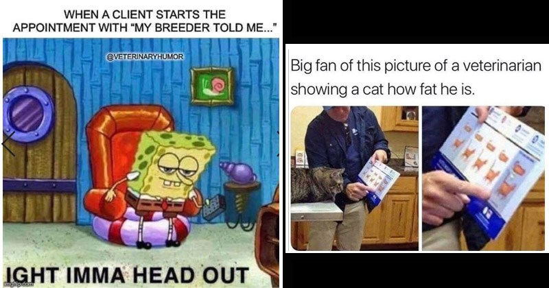 Funny memes about veterinarians and animals | Spongebob CLIENT STARTS APPOINTMENT WITH MY BREEDER TOLD VETERINARYHUMOR IGHT IMMA HEAD OUT | Big fan this picture veterinarian showing cat fat he is.