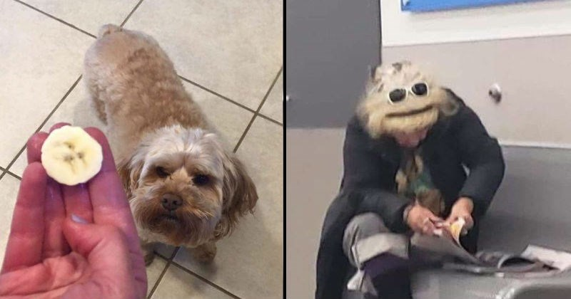 Stuff that looks like faces and other things | slice of banana with a shape resembling the face of a dog | woman wearing a headband and sunglasses over her head looking down so that her head looks like a muppet's face
