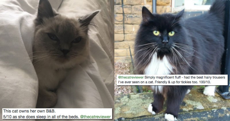 "The Cat Reviewer Encourages People to ""Review"" Every Cat They're Lucky Enough to Encounter"
