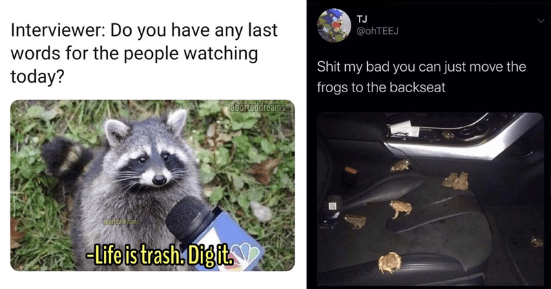 funny random memes and tweets | Interviewer: Do have any last words people watching today? aborteddreams áborteddreams -Life is trash. Digit. raccoon | TJ @OHTEEJ Shit my bad can just move frogs backseat