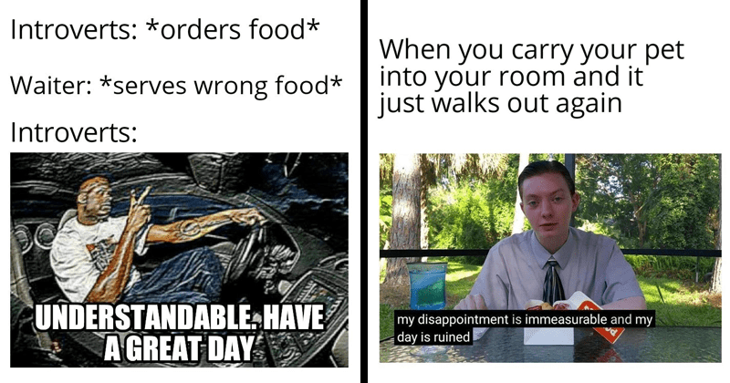 funny random memes | Introverts orders food* Waiter serves wrong food* Introverts: UNDERSTANDABLE HAVE GREAT DAY | Reviewbrah carry pet into room and just walks out again my disappointment is immeasurable and my day is ruined