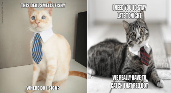 What Would Have Happened If Your Boss Was a Cat | cross eyed cat in a necktie THIS DEAL SMELLS FISHY WHERE DO I SIGN? SADANDUSELESS.COM | NEED STAY LATE TONIGHT REALLY HAVE CATCH RED DOT