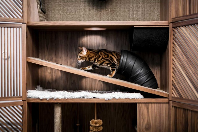 "Cat Psychologist Designs Purr-fect Indoor ""Cat Flat"" With 10 Things To Make Them Happy 