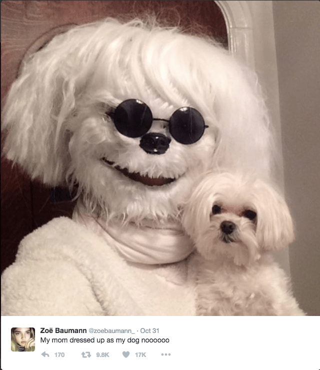 dogs,twitter,funny,animals,parents,costume,halloween