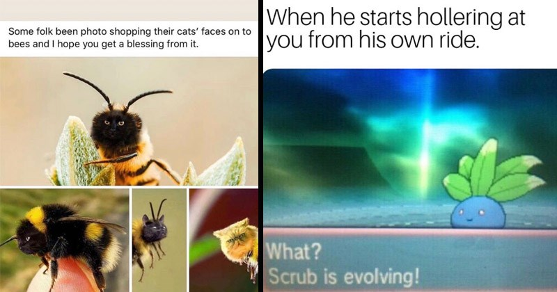Funny random memes | Some folk been photo shopping their cats' faces on bees and hope get blessing | he starts hollering at his own ride Scrub is evolving! Oddish Pokemon