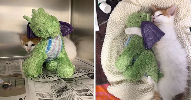 kitten stuffed dragon vet aww cute adorable comfort animals