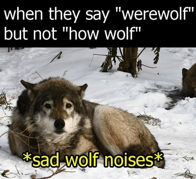 """top ten 10 memes daily 