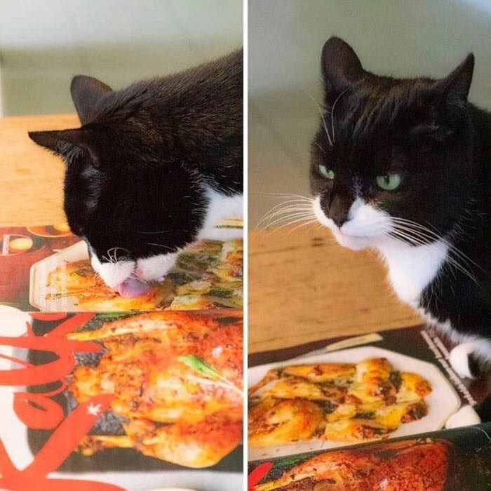 Poor Animals Who Are Having The Worst Day Ever | cat licking the picture of a cooked chicken on a box and then looking up grumpily