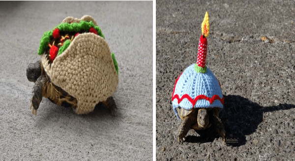Tortoise Fashion: When Your Grandma Got Too Much Time On Her Hands | turtles wearing knitted shell coverings shaped like a taco and like a cupcake with a candle stuck in it
