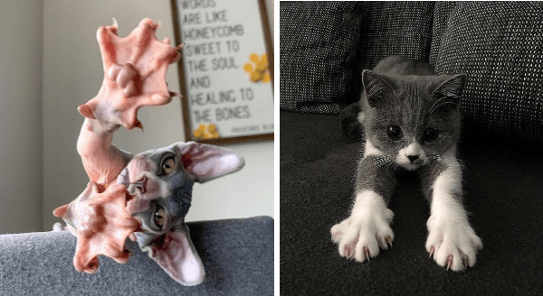Cats Showing Off Their Claws | cute sphynx hairless cat with webbed feet | adorable kitten with its paws outstretched