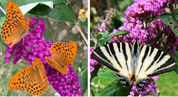 Beautiful Photos Of Colorful Butterflies On Flowers | beautiful nature multicolored insects on vibrant blossoms Scarce swallowtail