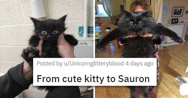 cute cuteness animals aww animal cats dogs adorable pics vids | From cute kitty to Sauron tiny black kitten with big round eyes who grows into a huge evil looking cat