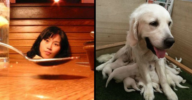 strange double-take causing confusing images | optical illusion girl's head in a spoon | dog with multiple legs that are actually puppies nursing