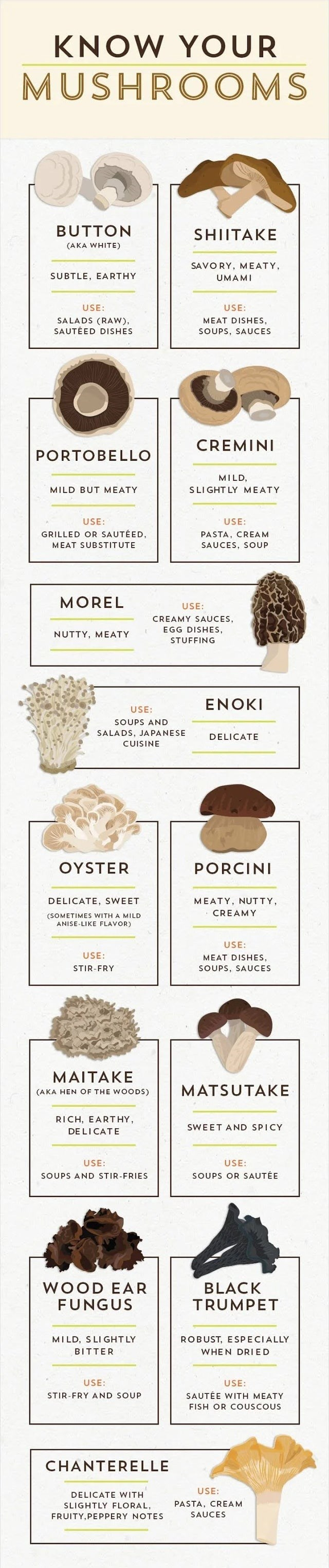 top ten daily infographics guides | KNOW MUSHROOMS BUTTON SHIITAKE (AKA WHITE) SAVORY, MEATY, SUBTLE, EARTHY UMAMI USE: USE: SALADS (RAW SAUTÉED DISHES MEAT DISHES, SOUPS, SAUCES CREMINI PORTOBELLO MILD, MILD BUT MEATY SLI GHT LY MEATY USE: USE: GRILLED OR SAUTÉED, PASTA, CREAM SAUCES, SOUP MEAT SUBSTITUTE MOREL USE: CREAMY SAUCES, EGG DISHES, NUTTY, MEATY STUFFING ENOKI USE: SOUPS AND SALADS, JAPANESE DELICATE CUISINE OYSTER PORCINI DELICATE, SWEET MEATY, NUTTY, CREAMY (SOMETIMES WITH MILD ANIS