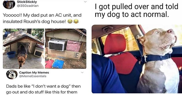 dogs doggo memes funny dog doggos meme lol animals cute aww adorable wholesome | ŠtickStickly @350zadrian Yooooo My dad put an AC unit, and insulated Roush's dog house! Caption My Memes @MemeEssentials Dads be like don't want dog then go out and do stuff like this them | got pulled over and told my dog act normal. dog sitting rigidly in the passenger seat