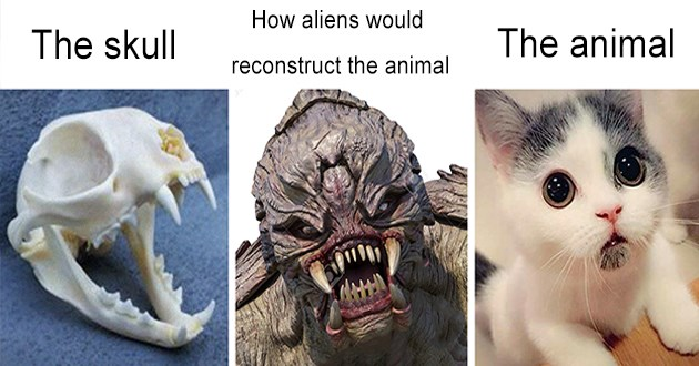 animals skulls aliens funny lol meme interesting thought provoking alien reconstruct bones | skull aliens would reconstruct animal animal cat skeleton scary predator and cute kitty cat
