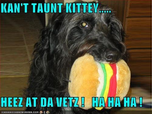 Cheezburger Image 1201563904
