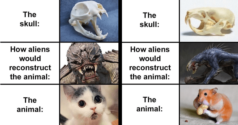 funny animal memes, animal skulls, skeletons, imagining how aliens would reconstruct animals just from their skulls | skull aliens would reconstruct animal animal: cute kitten and hamster