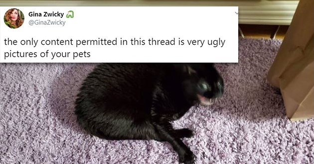 cats funny ugly photos tweets thread twitter lol unflattering pics pets animals lol |Gina Zwicky GinaZwicky only content permitted this thread is very ugly pictures pets 3:32 AM Jul 8, 2020 Twitter iPhone