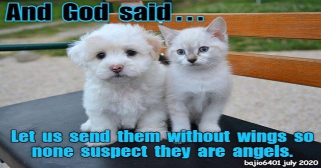lol lolcats cats funny animals kittens adorable cute aww animals memes | And God said Let us send them without wings so none suspect they are angels. bajio6401 july 2020