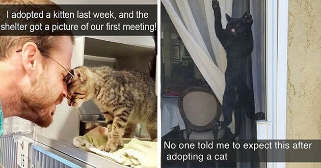 cats snaps snapchat wholesome aww cute animals cat kittens funny lol | adopted kitten last week, and shelter got picture our first meeting! man and cat touching foreheads | No one told expect this after adopting cat black cat climbing a screen door