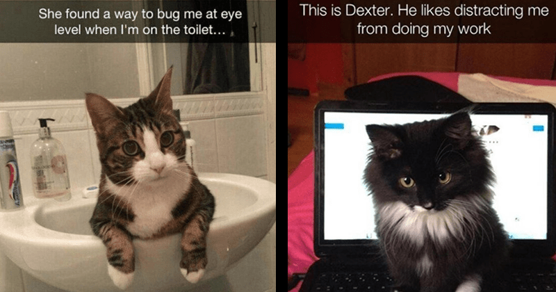 cute animal snaps, adorable cats, cat snaps | She found way bug at eye level on toilet cat sitting in a bathroom sink | This is Dexter. He likes distracting doing my work cute fluffy kitten sitting on a laptop