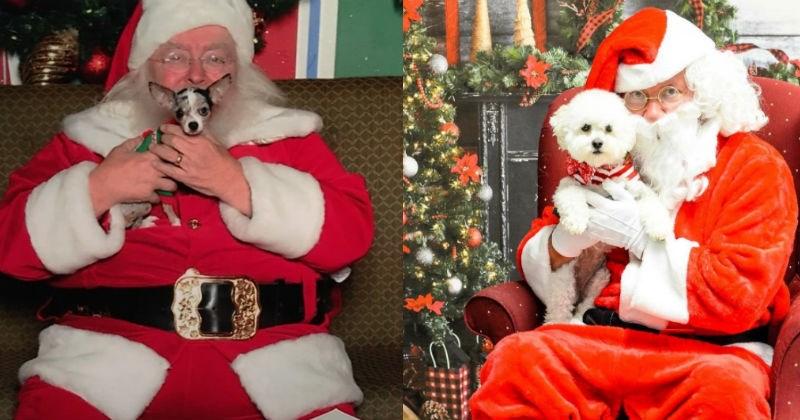 christmas dogs santa - 1203461