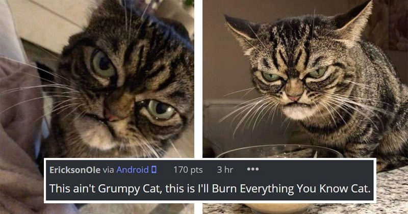 "Funny photos of the next ""Grumpy Cat"" who looks even angrier 