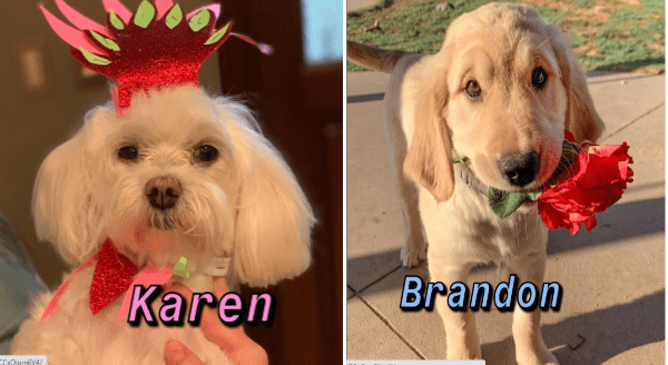 Funny dog names | funny dog in a hat named Karen | adorable puppy named Brandon holding a flower in its mouth