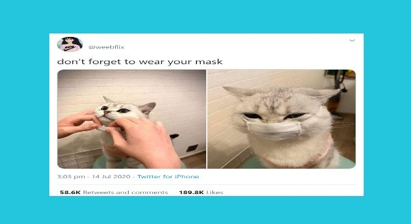 Funniest animal tweets | @weebflix don't forget wear mask 3:03 pm 14 Jul 2020 Twitter iPhone 58.6K Retweets and comments 189.8K Likes cute cat wearing a tiny face mask