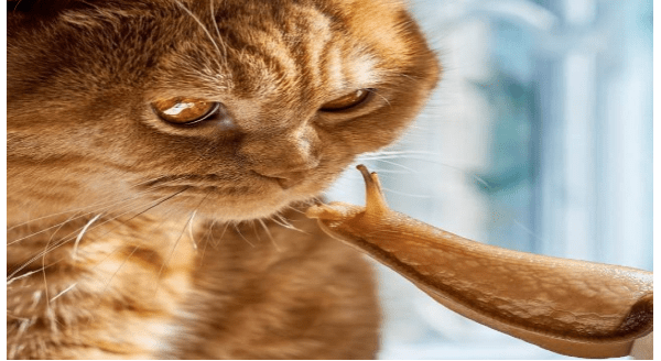 Amazing animal photos | orange cat looking closely at a snail