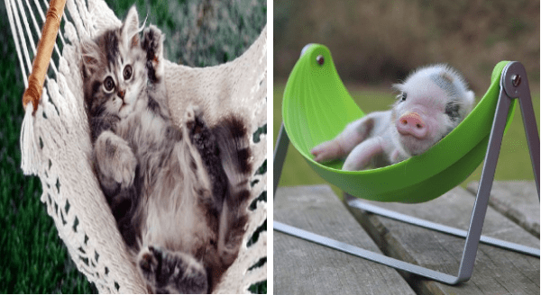 Animals in hammocks | adorable kitten baby cat in a knitted hammock | tiny pig piglet sleeping in a green hammock