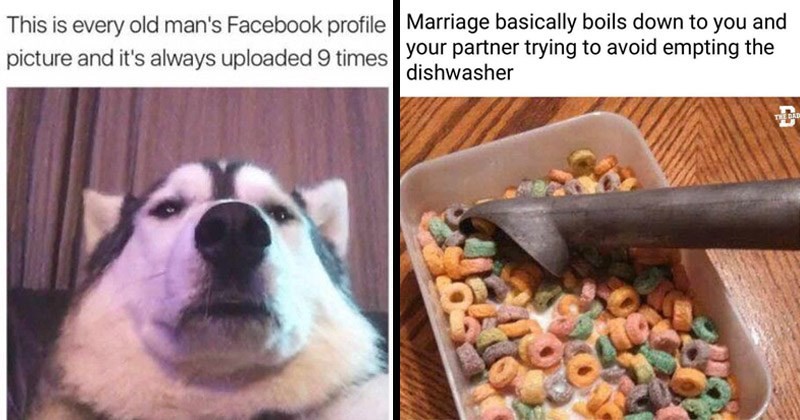 Funny random memes | This is every old man's Facebook profile picture and 's always uploaded 9 times husky dog taking a low angle selfie | Marriage basically boils down and partner trying avoid empting dishwasher DAD eating cereal from a plastic container with an ice cream scoop