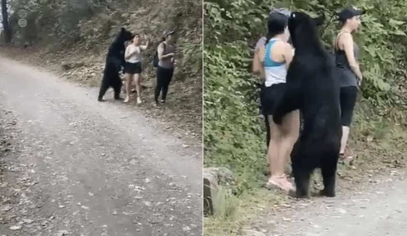 Black Bear Surprises Three Mexican Women On Hiking Trail | black bear cub curiously approaching group of women