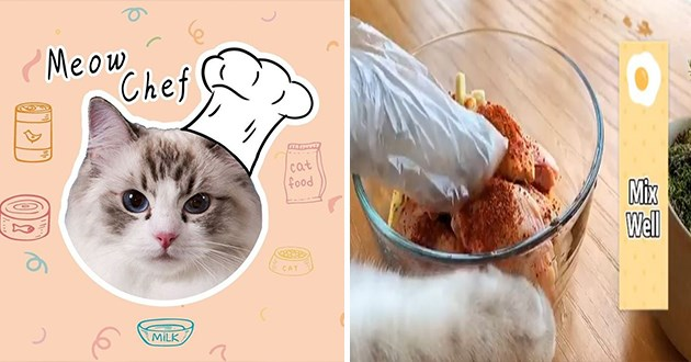 cats food recipes instagram adorable aww meow chef delicious spotlight adorable cute | cute cat wearing a chef's white hat and cat paws mixing ingredients in a bowl