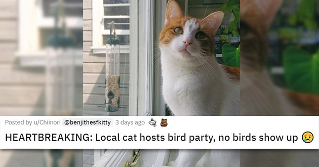 cats medley funny cute animals aww mourning loss life healing beautiful cat | HEARTBREAKING: Local cat hosts bird party, no birds show up sad cat looking away from an empty bird feeder