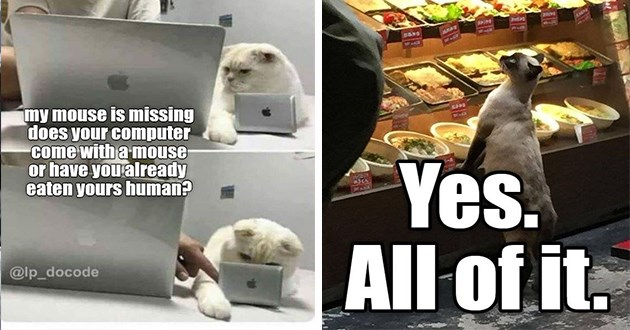 lol lolcats cats memes new fresh original cute aww funny adorable wholesome cat meme | my mouse is missing does computer come with mouse or have already eaten yours human lp_docode cat using a miniature laptop computer | Yes. All cat ordering at a salad bar