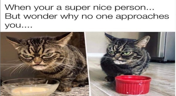 What it's Like To Be an Introvert In The Animal Kingdom (Memes) | super nice person But wonder why no one approaches grumpy looking cat angry mean expression