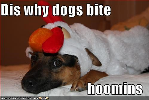 Dis why dogs bite hoomins - Cheezburger - Funny Memes | Funny Pictures