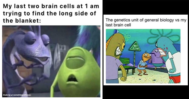 Funny dank memes about 'my last brain cell' | My last two brain cells at 1 am trying find long side blanket: Made by u/-somethingnotfunny- Mike Wazowski Monsters Inc. genetics unit general biology vs my last brain cell BUS STOP