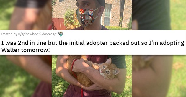 adopt adopted cats dogs aww wholesome uplifting heartwarming animals beautiful love rescue shelter | I was 2nd in line but the initial adopter backed out so I'm adopting Walter tomorrow man in face mask cradling an orange cat