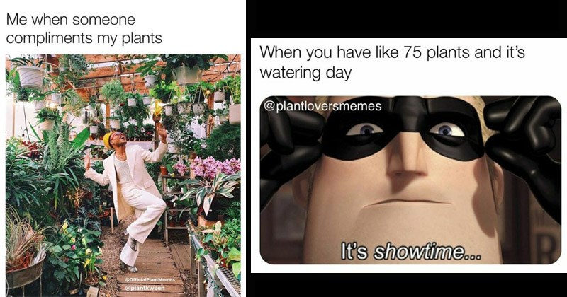 Funny memes about house plants | someone compliments my plants @OfficialPlantMemes @plantkween person dancing in a greenhouse | have like 75 plants and 's watering day @plantloversmemes 's showtime.o0 The Incredibles