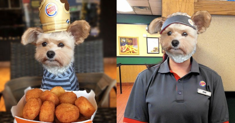 photoshop battle burger king dog