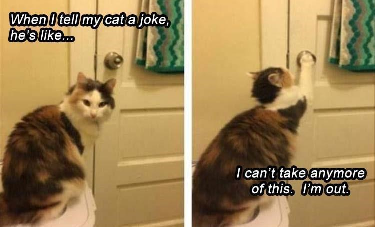 Fresh animal memes | tell my cat joke, he's like can't take anymore this out. funny pic of a cat reaching for a door handle