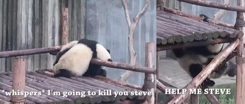 cute funny animal gifs, captioned animal gifs