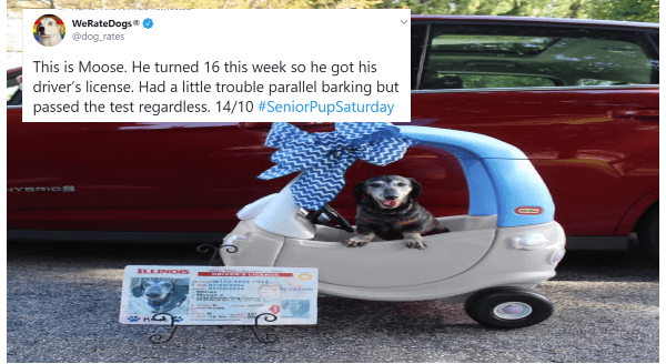 Congrats To The Cute Doggos Who Turned 16 And Got Their Driver's Licence | 23 Humor And Animals Retweeted WeRateDogs dog_rates This is Moose. He turned 16 this week so he got his driver's license. Had little trouble parallel barking but passed test regardless. 14/10 #SeniorPupSaturday ILLINOIS Jesse White Secretary State DRIVER'S LICENSE USA ILLINOIS ILLINOIS DRIVERSLCENSE w 142-45s.724 dd LIC NO M142-4558-7924 3 DOB: 07/22/2004 46EXP: 07/22/2024 1 Miller 2 Moose J 8 1234 Wiener Dog Central ŠPRI