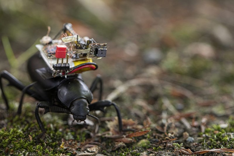 Scientists Installed a Tiny Wireless Go-Pro Camera On The Back Of a Beetle