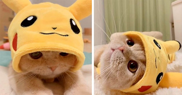pikachu hat cats cute pokemon eevee animals cat adorable aww pics hats cosplay