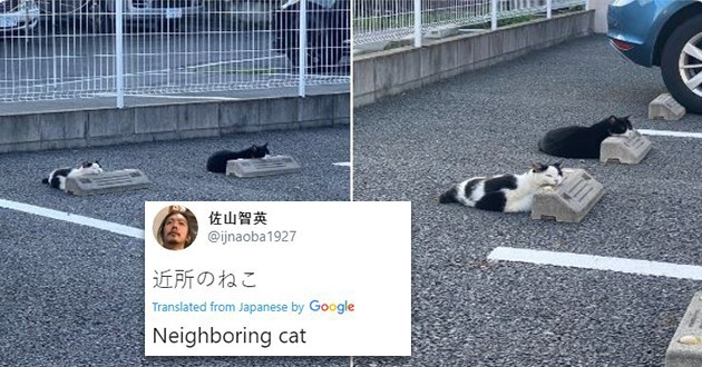 weird cats parking blocks resting comfortable lol cute aww animals pics tweets twitter funny | ijnaoba1927 Translated Japanese by Google Neighboring cat two cats sleeping taking up car parking spots