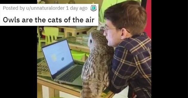 cute animals cuteness aww adorable baby vids pics wholesome uplifting | Owls are the cats of the air funny owl trying to get attention from man using a laptop sitting on the keyboard